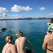 Tourists in the water with Bottlenose dolphin in the Bay of Islands, North Island, New Zealand while taking part in the swimming with dolphins experience run by Fullers Dolphin encounters from Paihia..The Bay of Islands is a stunning region consisting of 144 islands, abundant in natural wonder and marine life. With some of the warmest waters in New Zealand, the Bay of Islands is a natural wonderland where you can encounter bottlenose and common dolphins, whales, seals, penguins and a diverse range of birdlife.. Paihia, Bay of Islands, North Island,  New Zealand, 15th November 2010. Photo Tim Clayton.