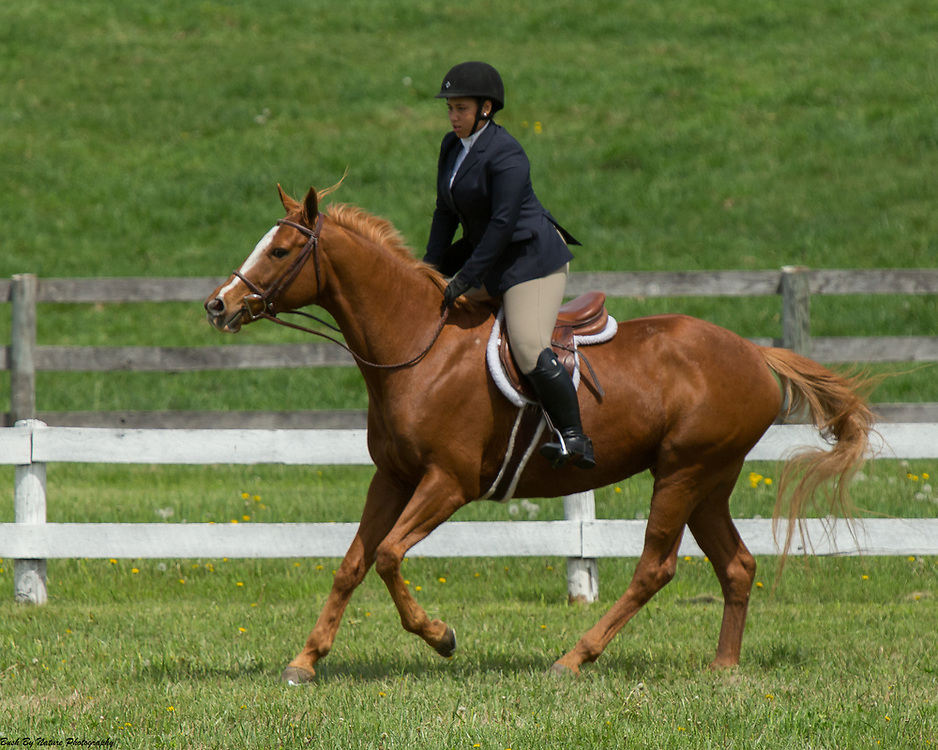 Image from the April 23, 2017 Elmington Farm Hunter Horse Show held at Elmington Farm in Berryville, VA