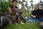 Rainer Altenkamp und Förster George Majumder beringen einen jungen Seeadler (Haliaeetus albicilla), Köpenick, Berlin, Deutschland. Biologist Rainer Altenkamp and forester George Majumder ringing a young White-tailed Sea eagle, Berlin, Germany.