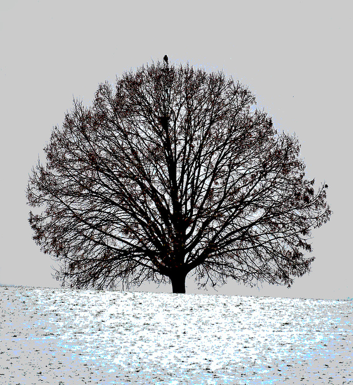 Tree with bird in winter silhouette