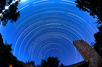 Star Trails - Northern Sky View (19:30-0545). Composite of images taken with a Nikon D3 camera and 16 mm f/2.8 fisheye lens (ISO 200, 16 mm, f/4, 119 sec exposures).