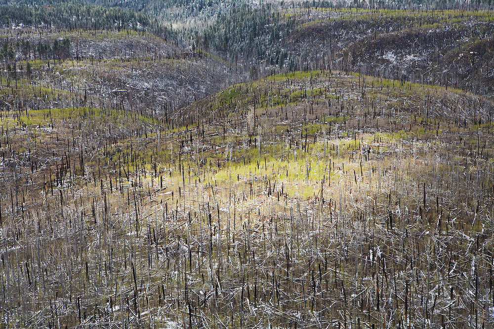 An aerial view of the snow covered burn area on the North Rim of Grand Canyon National Park. Aspens, which can be seen here as the bright green area, are often some of the first trees to grow after a forest fire.
