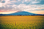 Rice farm in northern Japan at the foot of Mt Iwaki which is a volcano. This is at sunset just before the harvest.