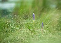 Spring time breeze. ©2013 Karen Bobotas Photographer