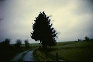 bomen | images
