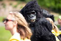 Runners, walkers and the guy in a gorilla costume walk the 7.46-mile course from San Francisco Bay to the Pacific Ocean at the 107th running of the Bay to Breakers, Sunday, May 20, 2018, in San Francisco. (Photo by D. Ross Cameron)