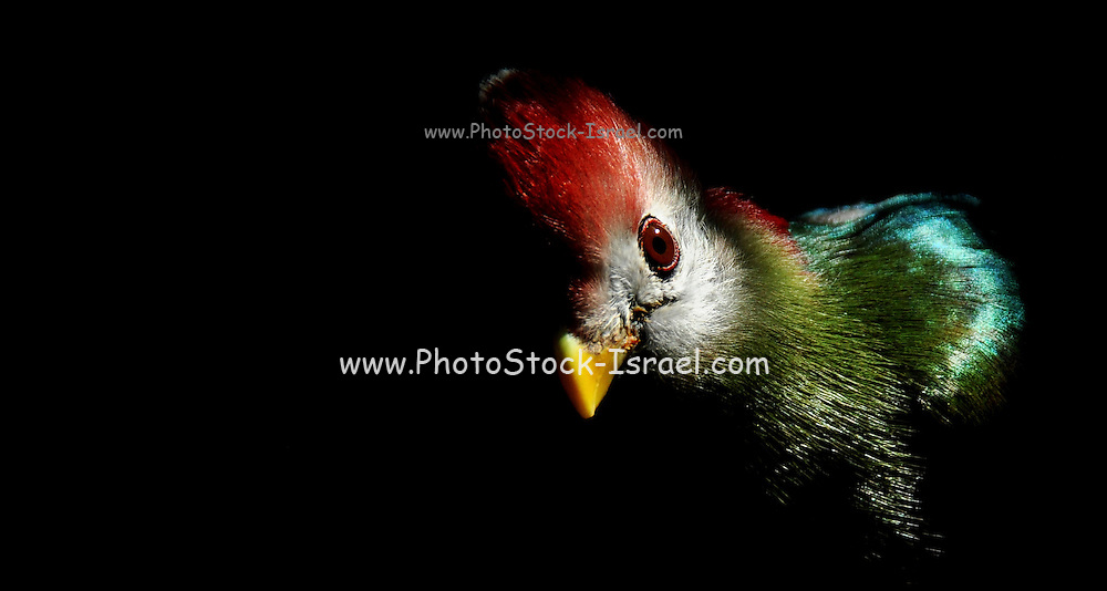 Colourful parrot on black background