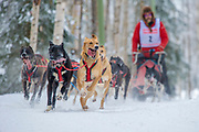 Dogs race along the Chester Creek Trail during the Fur Rondy sled dog race in Anchorage, Alaska.