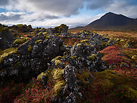 Autumn colours at Búðahraun Lava Field, Snæfellsnes Peninsula, Iceland,