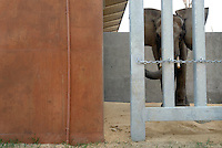 Callee, a 10-year old elephant, is in quarantine in a holding pen at The Birmingham Zoo on his first day in Birmingham Sunday, February 19, 2011 after being transported from the Pittsburgh Zoo.  (Christine Prichard - Special to the Birmingham News).Callee, a 10-year old elephant, is in quarantine in a holding pen at The Birmingham Zoo on his first day in Birmingham Sunday, February 19, 2011.  (Christine Prichard - Special to the Birmingham News).