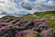 Purple heather and green grass cover the cliffs of Trotternish Peninsula above the Sound of Raasay, on Isle of Skye, Scotland, United Kingdom, Europe. Enjoy this view southwards towards Brothers Point from the same viewpoint as Kilt Rock & Mealt Falls along the A855 road, 15 km north of Portree (2 km south of Staffin) on Skye, the largest and northernmost of the major islands in the Inner Hebrides. Between 61 and 55 million years ago, volcanic activity on the west coast of Scotland covered the northern half of Skye in layers of molten rock over 1200m thick. Molten rock squeezed between layers of Jurassic sandstone rocks then cooled slowly and shrank into striking polygonal columns seen along this coast.