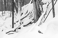 https://Duncan.co/fallen-trees-and-fresh-snow