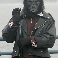 Street Performer Ronald Jones, dressed in a Gorilla costume, dances at the Santa Monica Pier on Tuesday, September 20, 2011.
