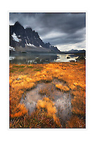 Aspens, Glacier National Park Montana