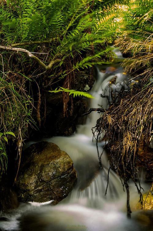 Small woodland stream at Lauvås.