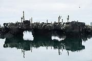 Los Tuneles<br /> Lava tunnels<br /> Isabela Island, <br /> GALAPAGOS,  Ecuador, South America