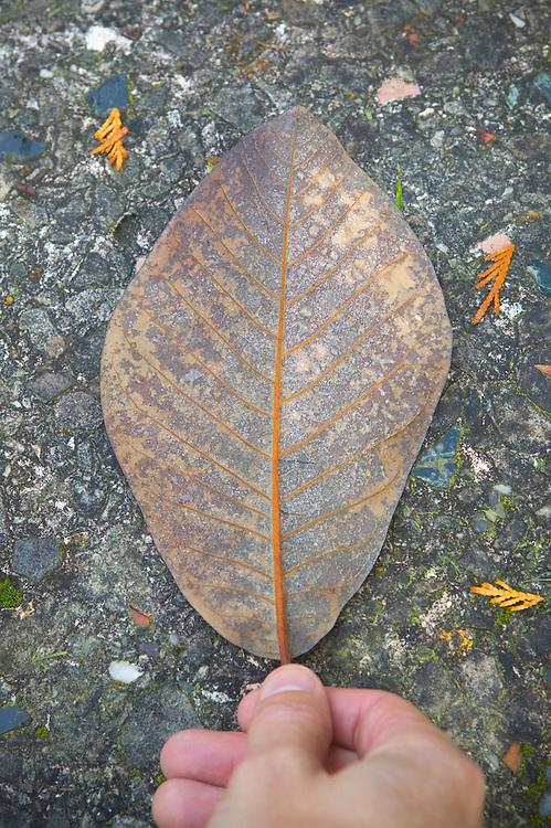 Hand holding an autumn leaf&amp;#xA;<br />