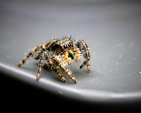 Hairy Spider. Image taken with a Fuji X-H1 camera and 80 mm f/2.8 macro lens (ISO 200, 80 mm, f/5.6, 1/60 sec)