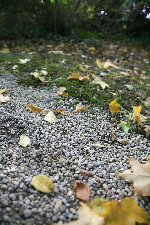 fallen Autumn leaves on fthe ground in Wicklow Ireland