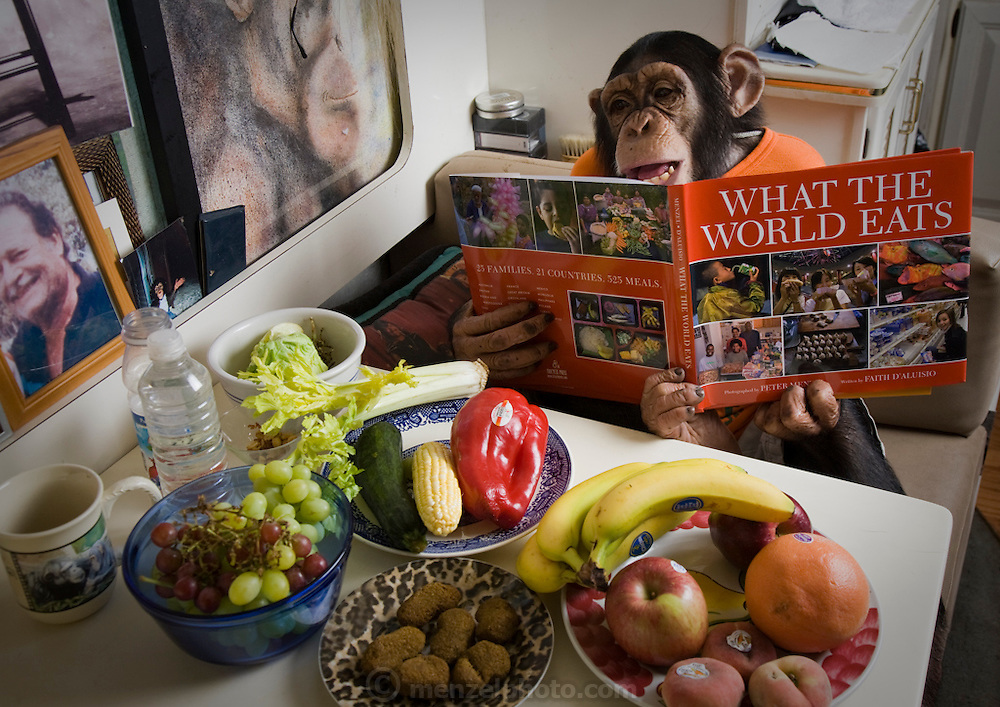 Ricki the Chimp reads the book What the World Eats during a break in a shooting session on what he himself eats in one day at the Bailiwick Ranch and Discovery Zoo in Catskill, NY. (Ricky the chimp is featured in the book What I Eat; Around the World in 80 Diets.) He is owned by circus folk Pam Rosaire-Zoppe and Roger Zoppe.