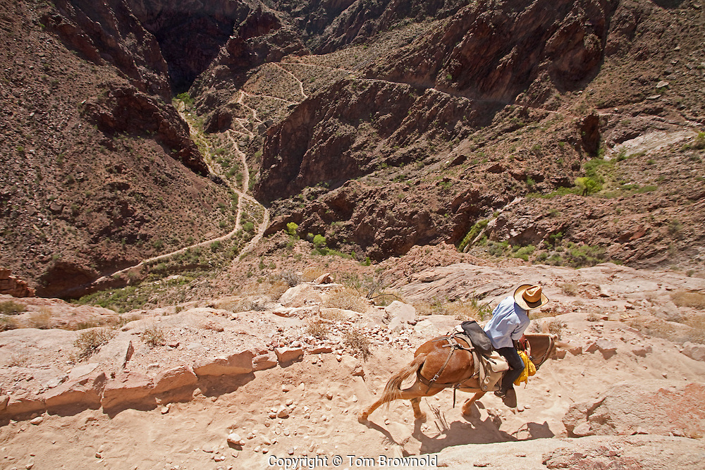 Mule rider down the Bright Angel trail into the Inner Granite groge of the Grand Canyon at Pipe Creek.