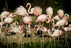 20.04.2011, Wien, AUT, Feature, im Bild Flamingos im Tierpark von Schloss Schönbrunn, EXPA Pictures © 2011, PhotoCredit: EXPA/ Erwin Scheriau