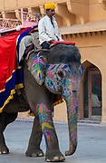 Decorated Indian elephant inside Amer Fort, Jaipur, Rajasthan, India.