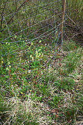 Showing fenced off area flourishing with wildflowers whilst open area has been grazed by deer. Hayley Wood