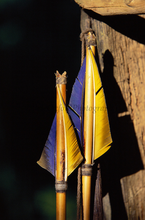 Machiguenga Indian Arrows<br />Fishing Arrow made from Macaw Feathers<br />Lower Urubamba River.  Amazon Rain forest.  PERU.<br />South America