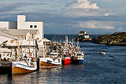 Fishingboats fishing for mackrell at dock in Skudeneshavn, Karmöy, western Norway.
