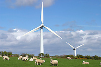 Wind turbines generating electricity in a field where sheep are grazing. Anglesey, Wales....
