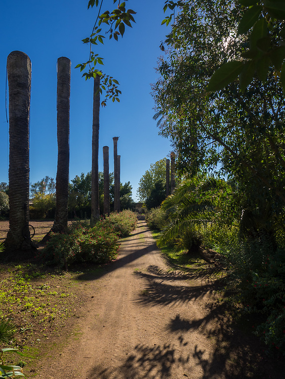 Gardens at Dona Maria - palm trees all over Portugal are diseased & dying