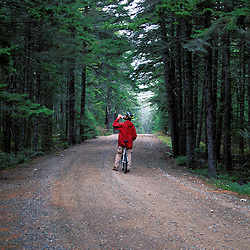 Acadia N.P., ME. Biking. Western Mountain Road. Boreal Forest.