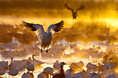 Bosque del Apache Photo Tour