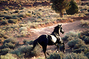 A black stallion running through arid country.