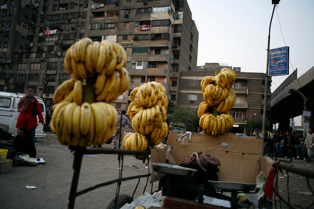 Bananas sold in Giza, just outside Cairo.