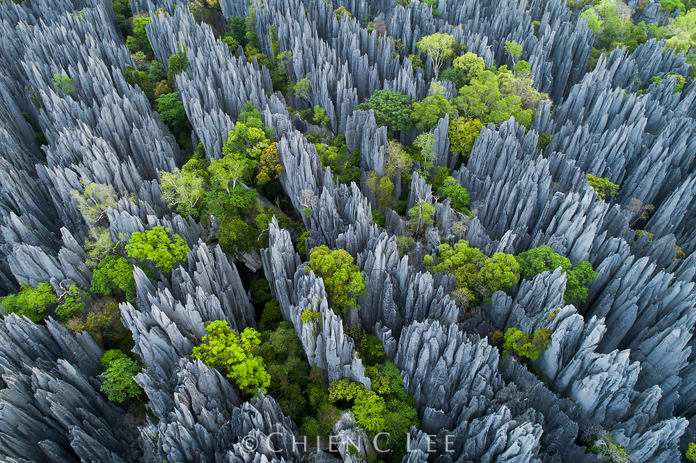 Stone forest at dawn: the first light of day brushes the limestone pinnacles of Madagascar's Tsingy de Bemaraha National Park. Spanning 600-square miles, this vast and impenetrable labyrinth of knife-edged towers and slot canyons is an invaluable wilderness reserve; 90% of all species occurring here are found nowhere else on Earth.