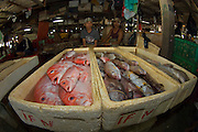 Fish market in Bali, Indonesia, with a selection of marine tropical fish for sale to primarily lower income buyers.