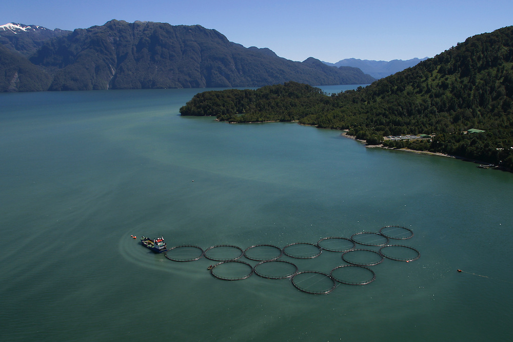 Salmon farms near Puerton Chacabuco, Chile, Feb. 6, 2004. Daniel Beltra/Greenpeace.