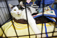 The woman who adopted a cat who had been at the shelter for over a year also adopted Ernie, a cat with allergy issues.