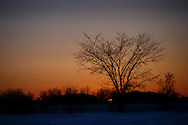 Tree in the winter with snow and setting sun in Martin, Ohio. Monday, Feb. 2, 2015. (Rick Osentoski)