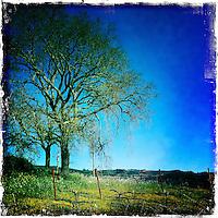 25 February 2012: PlumpJack spring vines in Oakville, Napa, California.  iPhone Stock Photo