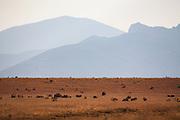 The foothills of the Sangre de Cristo Mountains near Cimarron, New Mexico.