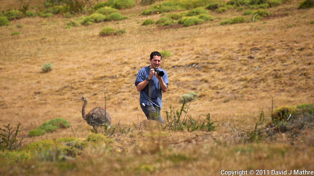 Photographer Missing the Greater Rhea (Darwin's Rhea) Escaping Behind His Back in Patagonia. Image taken with a Nikon D3s and 70-300 mm VR lens (ISO 200, 300 mm, f/11, 1/500 sec).