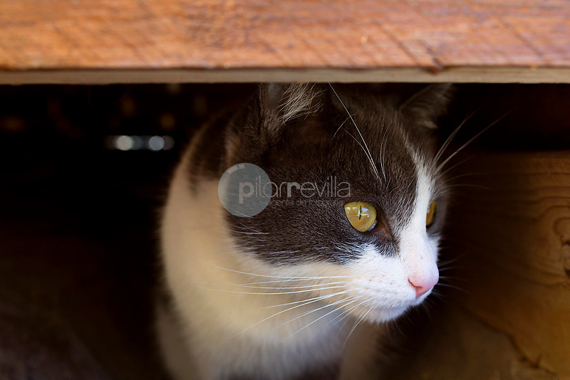 Gato ©Blossom&Peaches / PILAR REVILLA ©Blossom & Peaches / PILAR REVILLA