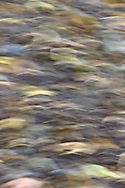 Woodland floor abstract