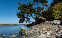 A summer day is gloriously deep blue and sunny at the secluded ocean cove of Margaret Bay on the Saanich Penninsula, Victoria, BC.
