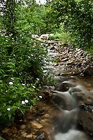 A small mountain creek flow.