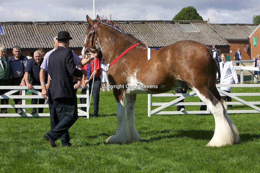 Gavin Holmes' Thomas<br /> 3rd  Gelding, 3 yrs old &amp; over Class
