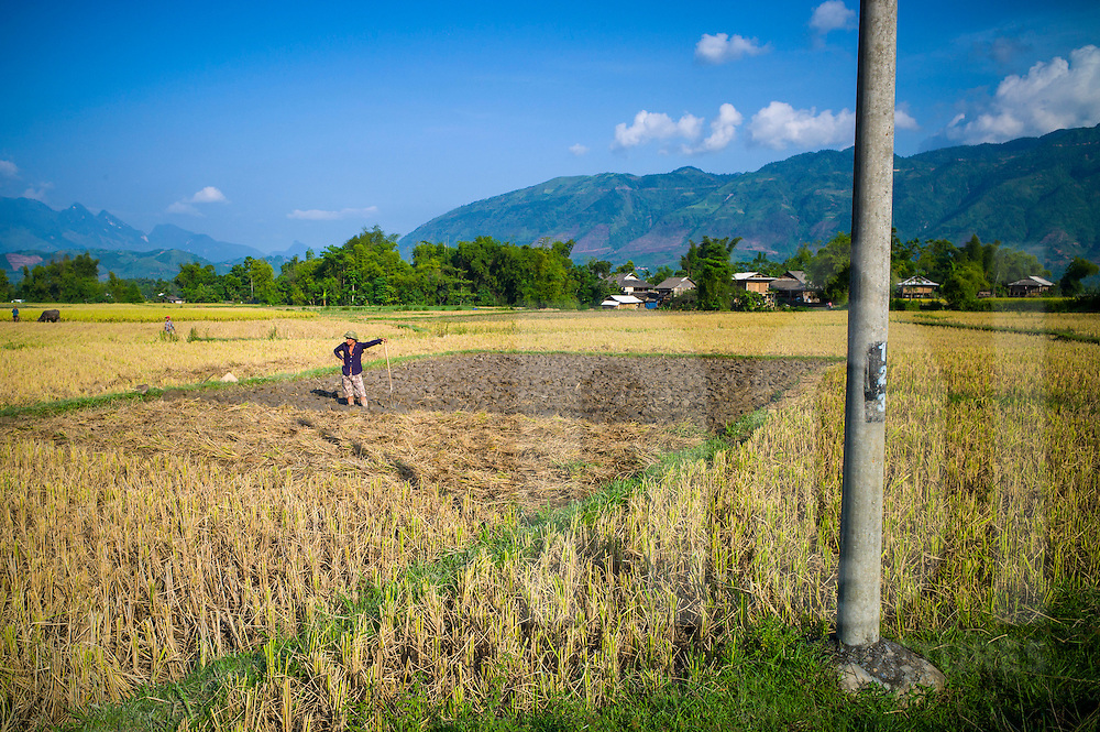 A farmer stands in a crop field, Nghia Lo, Vietnam, Southeast Asia